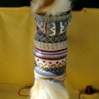 ワンちゃんのフード付きセーター