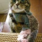 猫用マフラー
