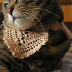 猫のケープ