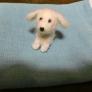 羊毛フェルト 白い犬