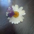 押し花のブローチ