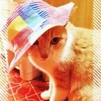 パッチワーク風の布を使った帽子*