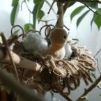 鳥の巣&たまご