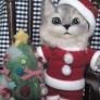 羊毛フェルトの猫ちゃんサンタ