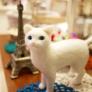 蒼い瞳の白猫