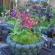 植物を楽しむ鉢