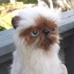 羊毛フェルト/ヒマラヤン猫