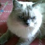 nana_cat9