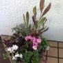 寄せ植え鉢-2010