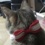 猫ちゃんのリボン