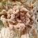もこもこ*立体的なお花のコサージュ