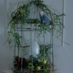 鳥かご型ライト・電気を付ける編ウォールランプ