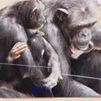チンパンジーの母の愛