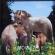 モウコノウマの赤ちゃんの立体コラージュ