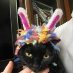 猫用うさぎ耳帽子