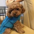 縄編みの犬セーター