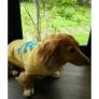 犬のセーター(スカル)