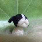 羊毛わんこ(アメコカ)