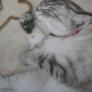 I LOVE CAT♪